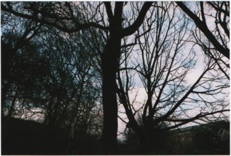 trees-silhoette